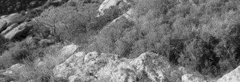 Descobriment de la cova paleolítica del Cau de les Guilles, Girona (1947)